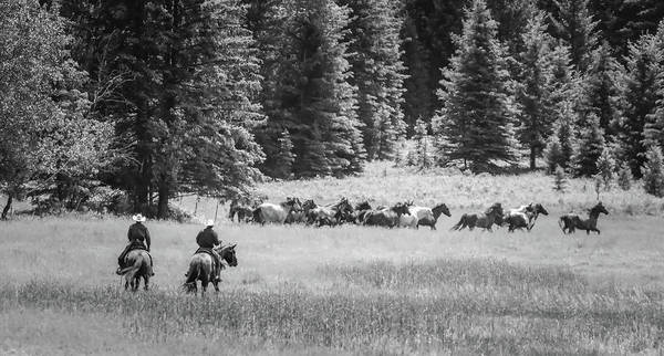 Wall Art - Photograph - Rounding Up The Horses by Athena Mckinzie