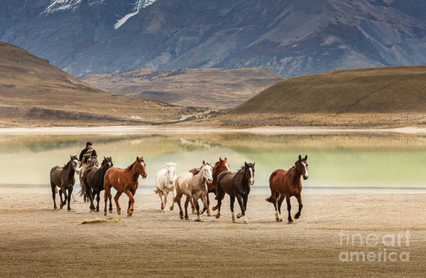 Photograph - Rounding Up The Horses by Patti Schulze