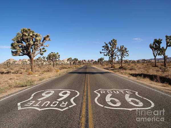 Remote Photograph - Route 66 With Joshua Trees Deep Inside by Trekandshoot