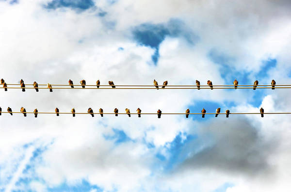 Parallels Wall Art - Photograph - Row Of Birds On Electric Wire by © Copyright Svetan Photography - All Rights Reserved.