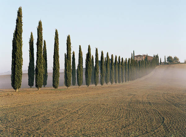 Trees In Fog Photograph - Row Of Cypress Trees And Farmhouse In by Gary Yeowell