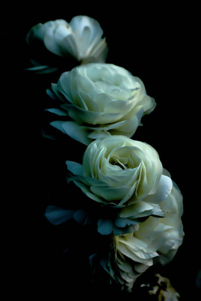 Photograph - Row Of Three by Eric Christopher Jackson