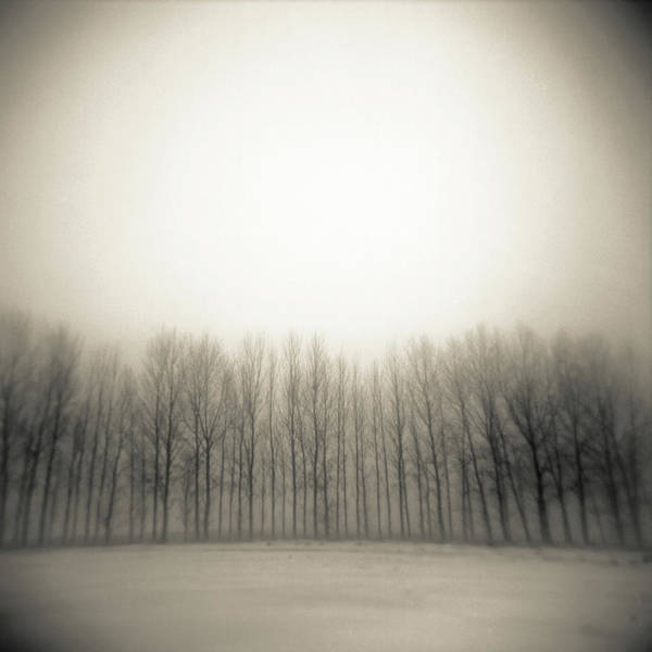 Trees In Fog Photograph - Row Of Trees In Mist by James Arnold