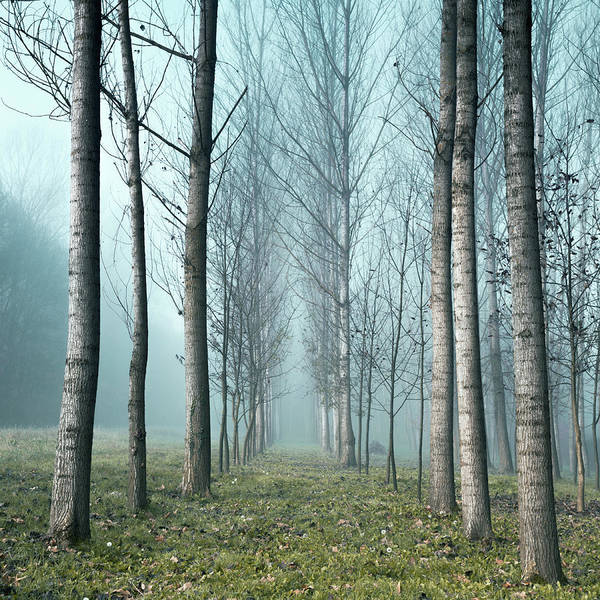 Trees In Fog Photograph - Row Of Trees In The Mist by Matteo Colombo