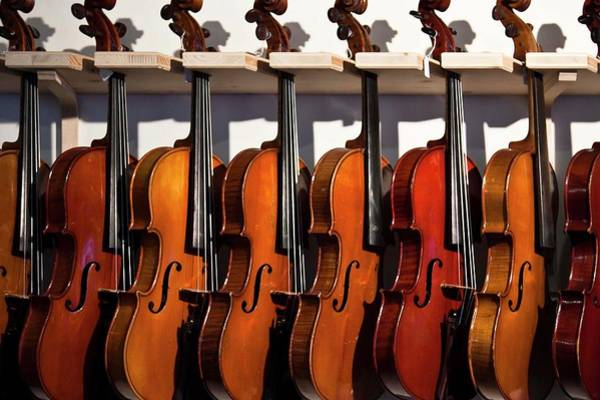 Workshop Photograph - Row Of  Violins by Gerard Hermand