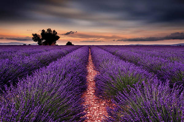 Photograph - Rows Of Happiness by Jorge Maia