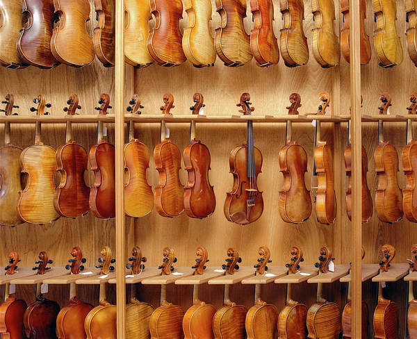 Hanging Photograph - Rows Of Violins Hanging In Shop by Dtp