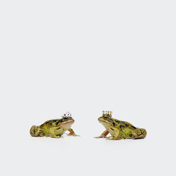 Royalty Photograph - Royal Frogs by Maarten Wouters