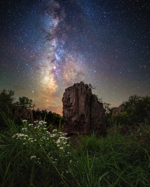 Wall Art - Photograph - Royalty  by Aaron J Groen