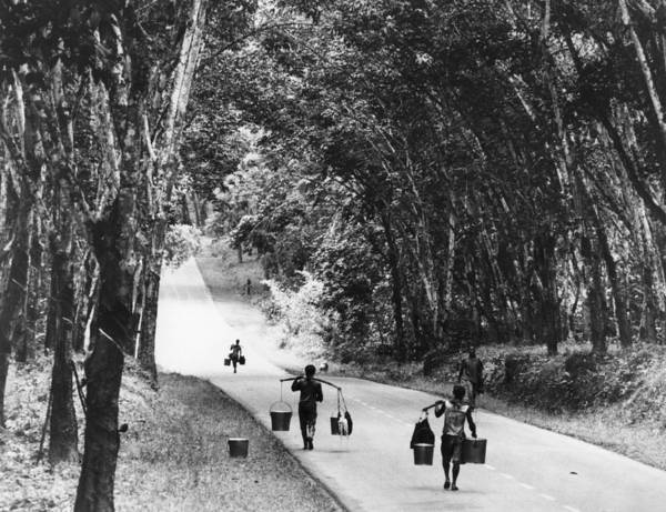 Three Trees Photograph - Rubber Carriers by Central Press