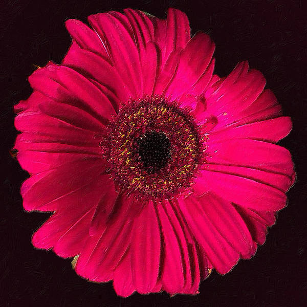Painting - Rubino Red Daisey Pink by Tony Rubino