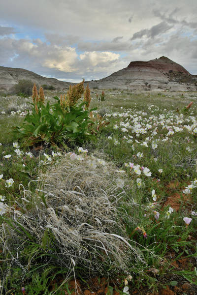 Photograph - Ruby Mountain Wildflowers And Grasses by Ray Mathis
