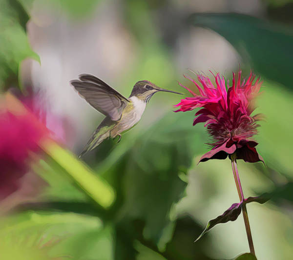 Photograph - Ruby-throated Hummingbird 2019-artistic by Thomas Young