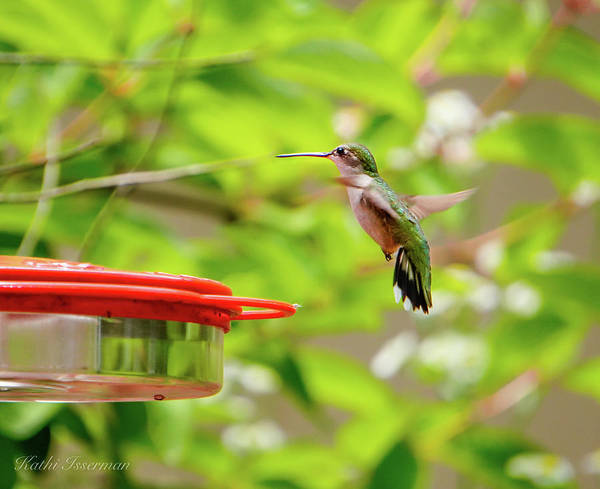 Wall Art - Photograph - Ruby Throated Hummingbird by Kathi Isserman
