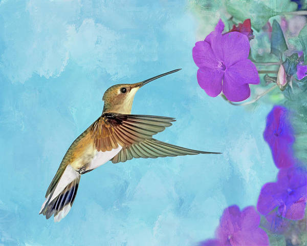 Wall Art - Photograph - Ruby-throated Hummingbird With Impatiens by Nikolyn McDonald