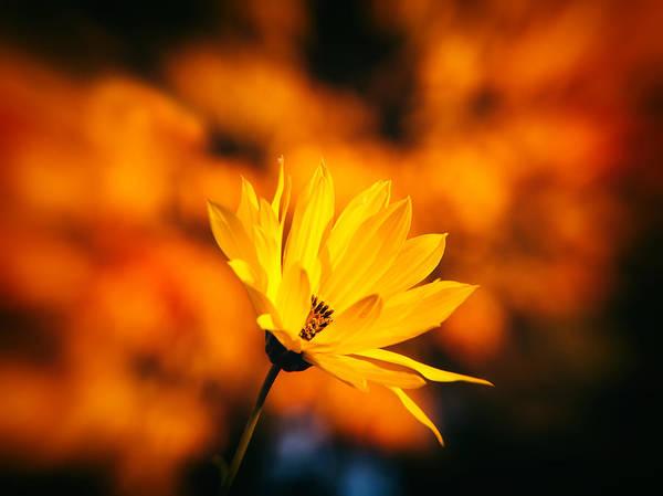 Photograph - Rudbeckia Grandiflora 3 by Jaroslav Buna