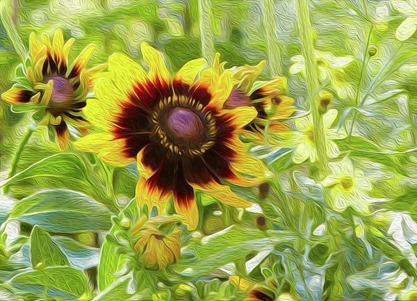 Digital Art - Rudbeckia Style by Garden Gate magazine