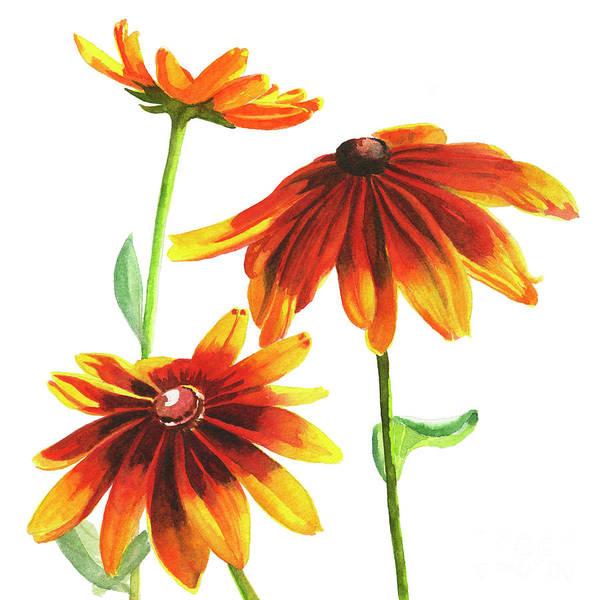Perennial Painting - Rudbeckia Summerina Brown Square Design by Sharon Freeman