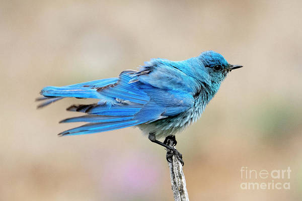 Wall Art - Photograph - Ruffled Blue by Mike Dawson