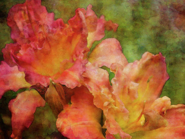 Photograph - Ruffled Passion 4324 Idp_2 by Steven Ward