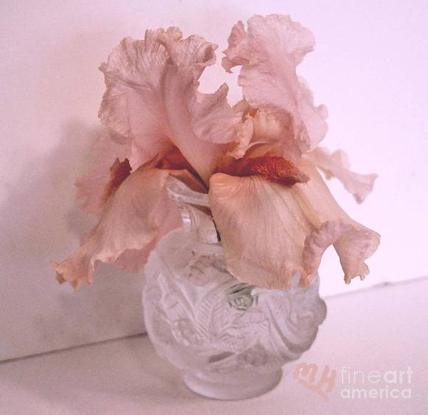 Wall Art - Photograph - Ruffles Still Life Iris by Marsha Heiken