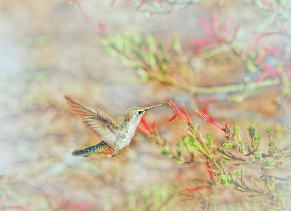 Wall Art - Photograph - Rufous Hummingbird In The Arizona Garden by Jennie Marie Schell