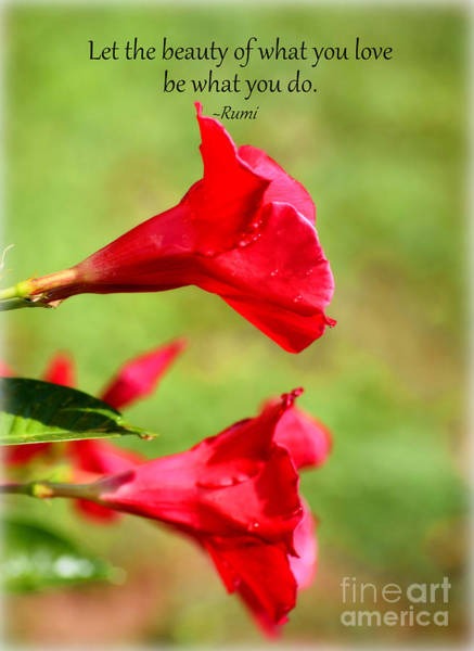 Photograph - Rumi And The Red Mandevillas by Patti Whitten