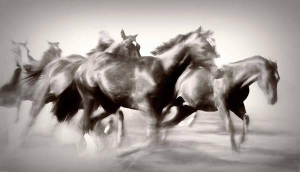 Photograph - Run Free by Pamela Steege