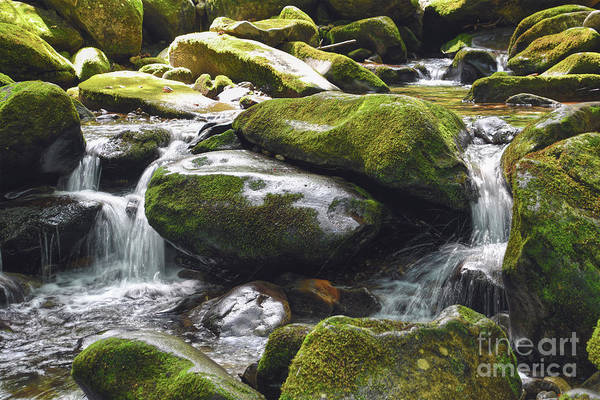 Photograph - Running Brook by Phil Perkins