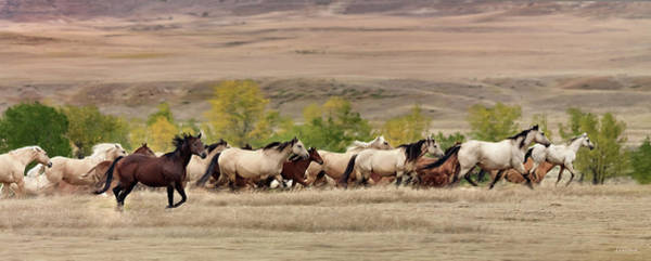 Montana Photograph - Running Free by Leland D Howard