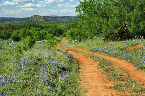 Wall Art - Photograph - Rural Road Through Texas Bluebonnets by Adam Jones