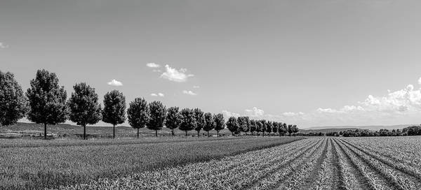 Wall Art - Photograph - Rural Scene With Fields, Baden by Panoramic Images