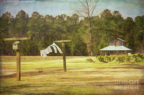 Vintage Conway Photograph - Rural South by Michelle Tinger