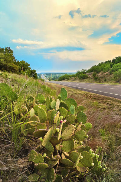 Urban Nature Photograph - Rural Texas Highway, Prickly Pear by Dszc