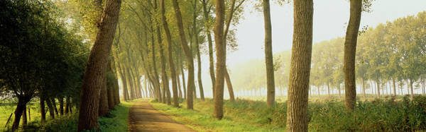 Wall Art - Photograph - Rural Tree Lined Road Belgium by Panoramic Images