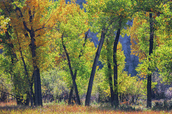 Wall Art - Photograph - Russell Autumn by Todd Klassy