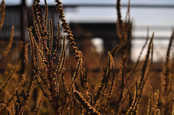 Photograph - Rust by Carl Young