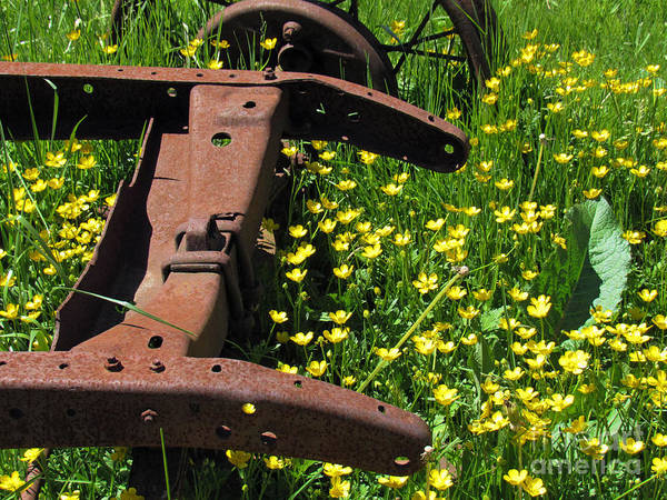 Photograph - Rusted Wagon In A Field Of Flowers by Roberta Byram