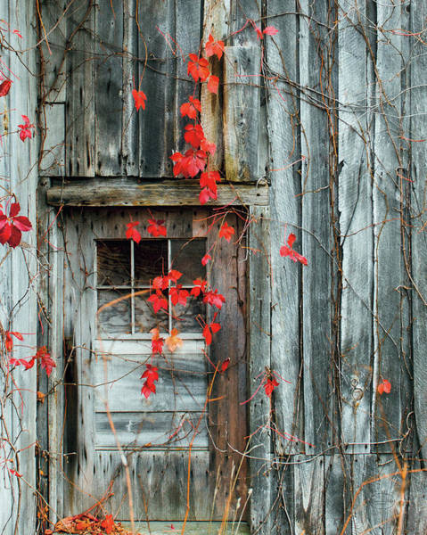 Wall Art - Painting - Rustic Autumn by Brookview Studio