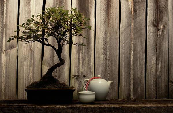 Teapot Photograph - Rustic Decorative Arrangement Of Bonsai by The flying dutchman
