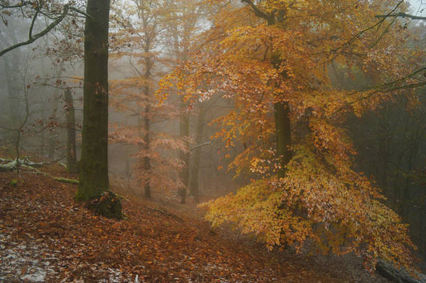 Photograph - Rusty Autumn In Misty Woods 1 by Jenny Rainbow