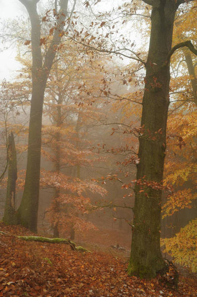 Photograph - Rusty Autumn In Misty Woods 2 by Jenny Rainbow