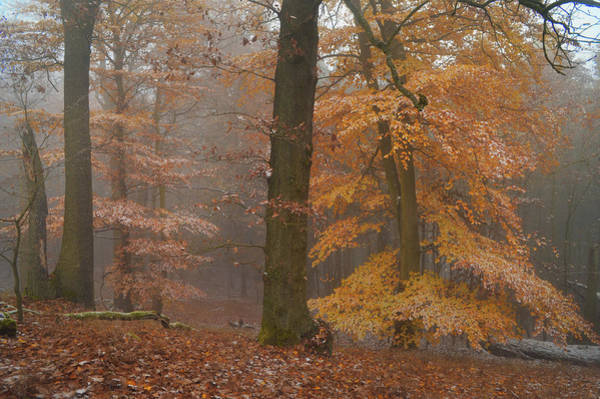 Photograph - Rusty Autumn In Misty Woods by Jenny Rainbow