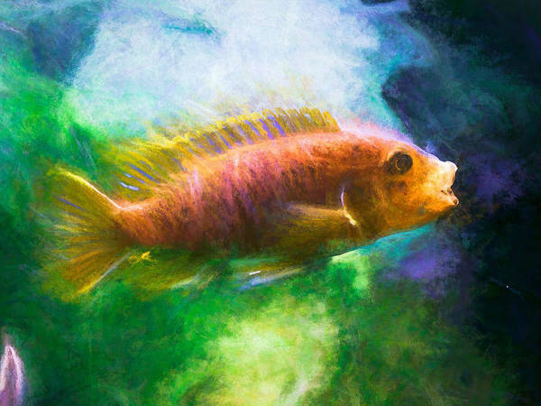 Digital Art - Rusty Cichlid African Cichlid by Don Northup