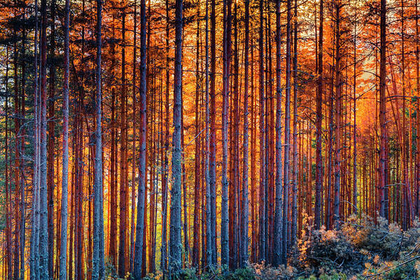 Wall Art - Photograph - Rusy Forest by Evgeni Dinev