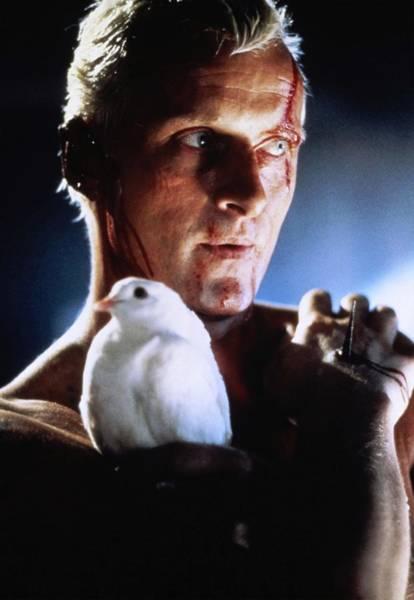Blade Runner Photograph - Rutger Hauer In Blade Runner -1982-. by Album