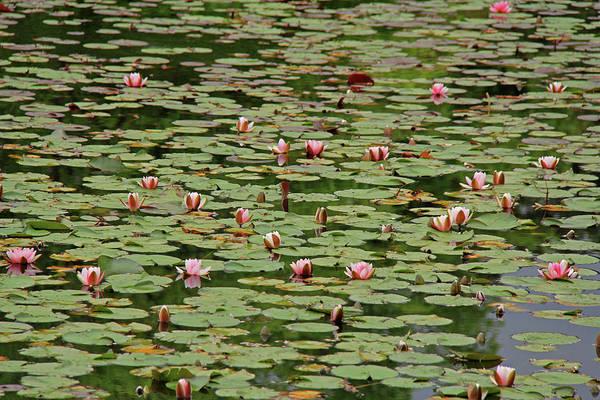 Photograph - Ryoan-ji Temple Garden - Kyoto, Japan by Richard Krebs
