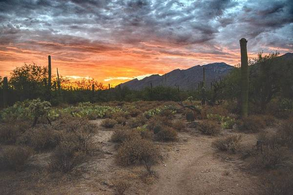 Photograph - Sabino Canyon Sunset, Tucson, Az by Chance Kafka