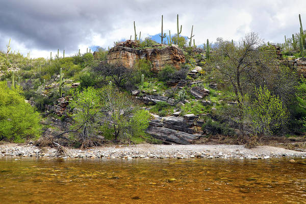 Coronado National Forest Photograph - Sabino Creek by Mitch Cat