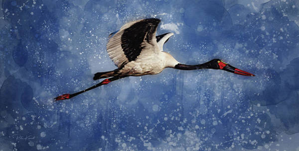 Digital Art - Saddle Billed Stork by Peter Kennett